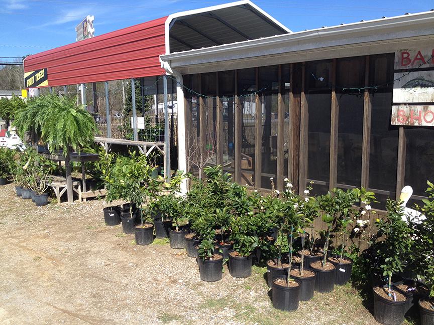 Vancleave 1 stop nursery plants flowers trees bait shop flowers plants trees servicing vancleave gautier ocean springs ms mightylinksfo
